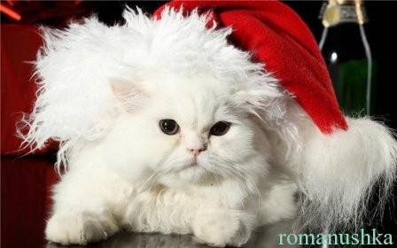 новогодняя шапка для кота