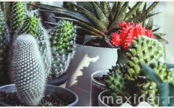 денежные цветы для дома название и фото